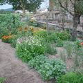 2008 08 11 Mon jardin