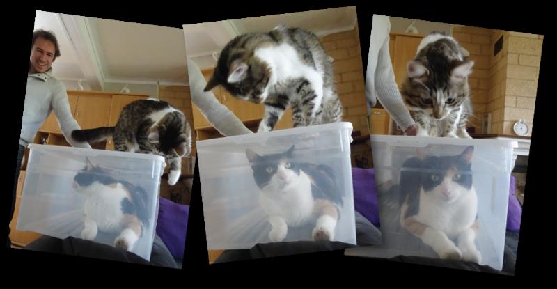 chats en boite