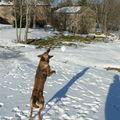 2009 01 13 Kapy qui va réussir a attraper la boule de neige