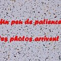 Z-9898 Noël 2013 à Saint-Omer