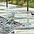 Photos du jour - goéland-tempête à berre-04.05.2016
