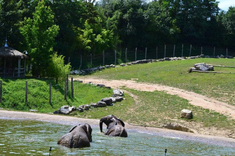 zooparc de beauval (118)