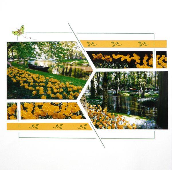 2012 10 27Tulipes jaunes