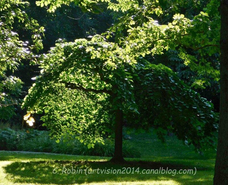 Bois-de-Coulonge-Arboretum-22