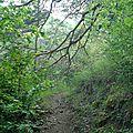 Végétation sentier parc national du Mercantour