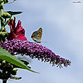 Couleurs de papillons (1)