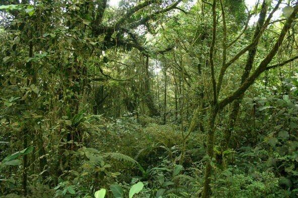 Forêt de montagne_Gunung Brinchang_XRu