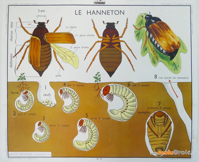 Affiche-ARAIGNEE-ECREVISSE-HANNETON-6-muluBrok-Vintage