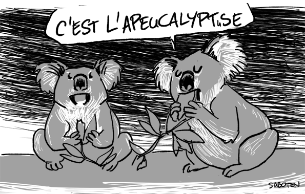 apeucalyptus3
