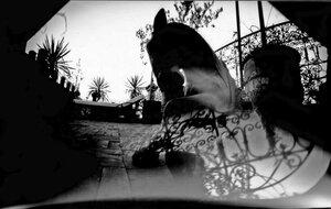 cheval-maroc