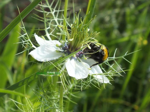 abeille3