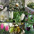 Printemps : plaisirs de fleurs et de chine...