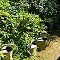 Windows-Live-Writer/jardin-charme_12604/DSCN0554