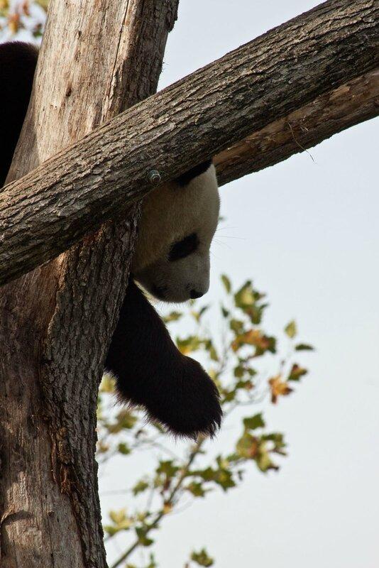 101-Panda Geant