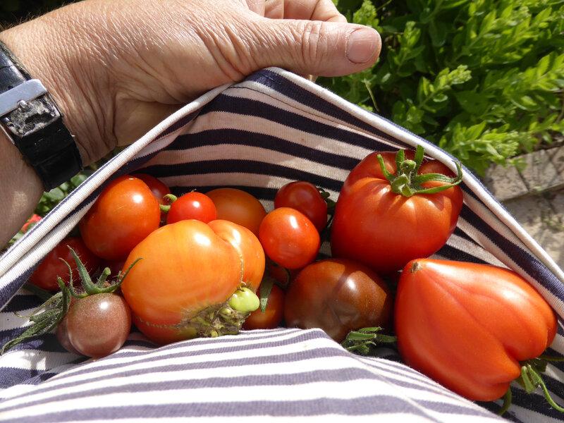24-tomates (2)