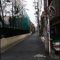 037_Sakura_Aur_lie