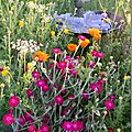 Windows-Live-Writer/Jardin_10232/DSCN0755_thumb