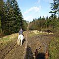 Balade à cheval dans la forêt P1080198