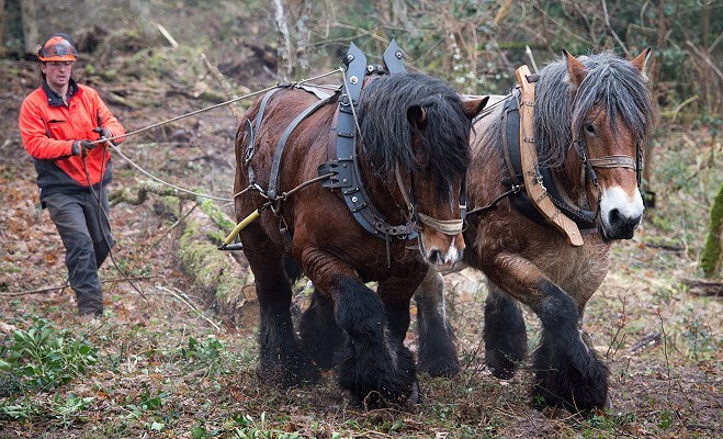 chevaux forêt