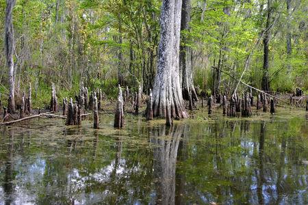 Louisiana_bayou_28