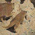 cdv_20130315_08_zoo