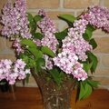 BOUQUET DE LILAS 2