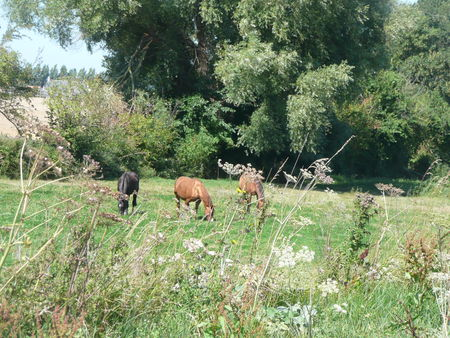 CANAL_CHEVAUX
