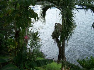 Martinique_165__Medium_