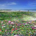 plage fleurie