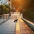 paris-montmartre-chats