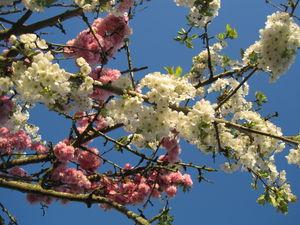 fleurs_en_ciel___1_