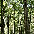 La forêt cathédrale d'Issaux.