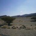 paysage d'acacias en Ethiopie