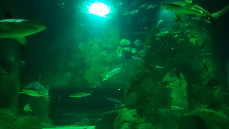 Biarritz, Musée de la Mer, Indo Pacifique, requins (64)