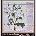 Carte 3d roses blanches