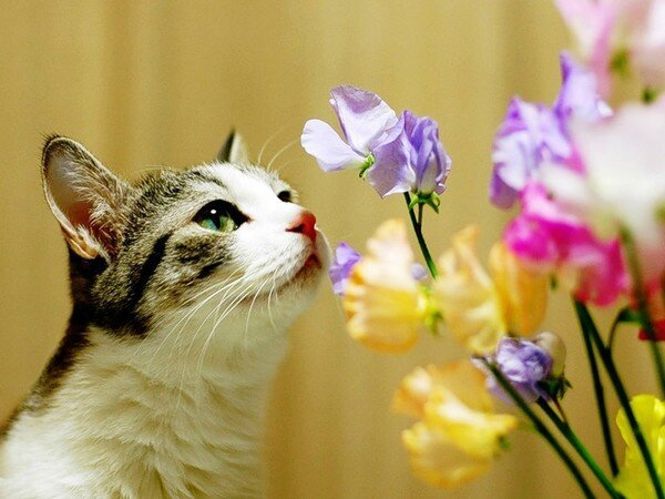 Cats-And-Flowers5