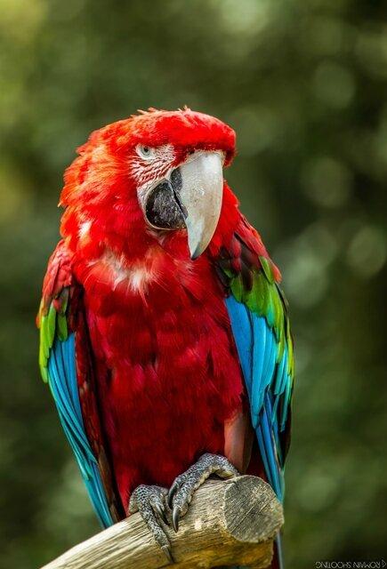 les perroquets (3)