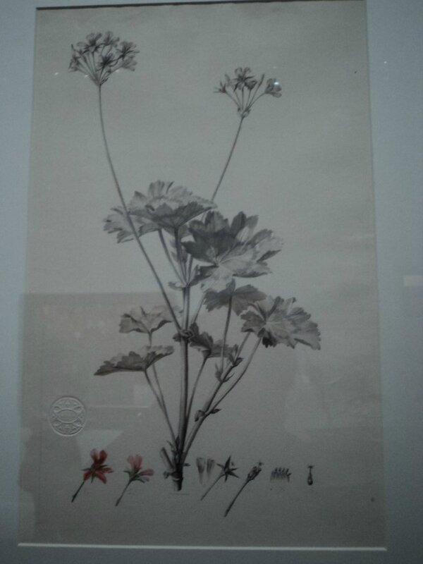 DSC01618 (Copier)