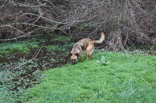 2009 04 13 Kapy sur le couvre sol de l'étangs