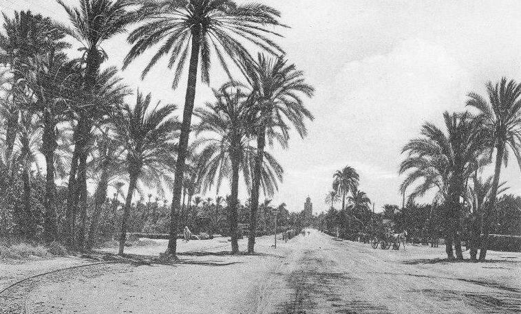Voie-de-60-palmiers-055