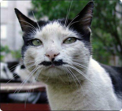 chat_moustache_028