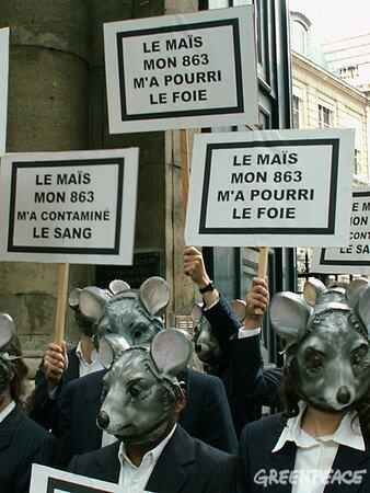 rats_malades_du_mais_MON863_demandent_un_moratoire_1