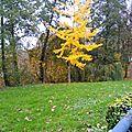 Larmes d'automne