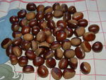 Marrons_glac_s_001
