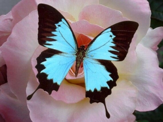 nature_animaux_papillon_img