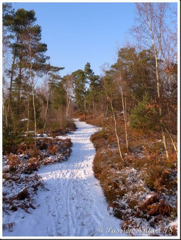 Forêt de Rambouillet sous la neige (11)