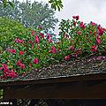 Découverte de la symphorine avec l'association les jardingues
