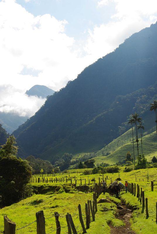 Chemin de la vallée de Cocora