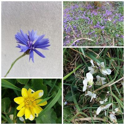 Printemps & fleurs (10)