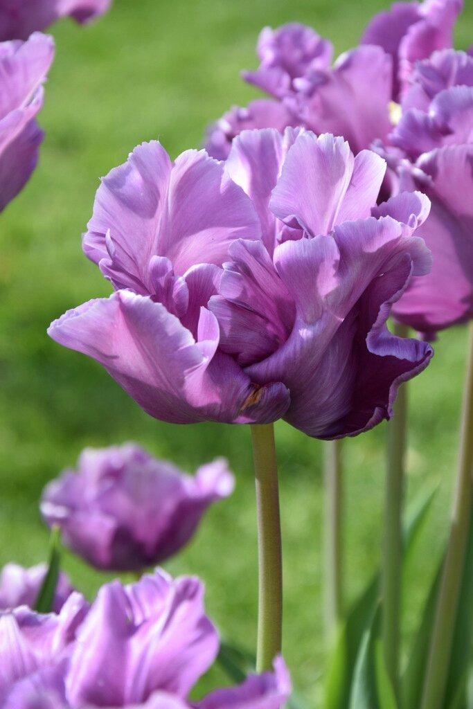 Photographie de fleurs au jardin des plantes de Nantes le 6 mai 2016 ...